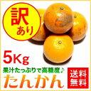 訳あり たんかん ご家庭用 5kg【送料無料】 奄美大島 タンカン (みかん) 果物 フルーツ オレンジ 詰め合わせ