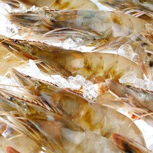 【生食OK!!無添加!】【冷凍】ハワイ産有頭海老カウアイの宝石(カウアイシュリンプ)1kg(約30〜40尾入り)