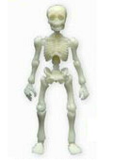 Pose Skeleton Human Color Series - Human 01: Lime Green (Phosphorescent Green)(Released)(ポーズスケルトン ヒトカラーシリーズ ヒト01 ライムグリーン(蓄光緑))