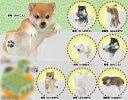 PUTITTO 柴犬 12個入りBOX[奇譚クラブ]《12月予約》