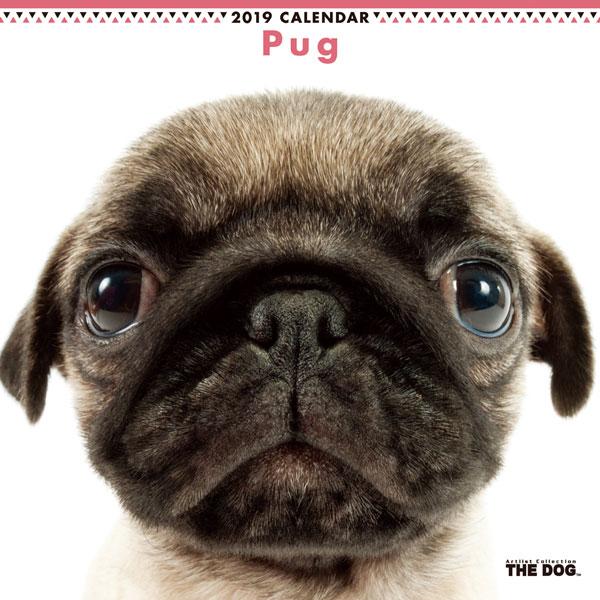 THE DOG カレンダー パグ (2019年)[アーリスト]《取り寄せ※暫定》