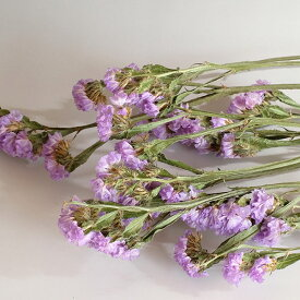 スターチス パープル(約20g入)<プリザーブドフラワー・フラワーアレンジメント・花材・花資材・ナチュラル>