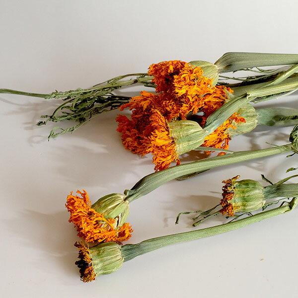 マリーゴールド Nオレンジ(約30g)<プリザーブドフラワー・フラワーアレンジメント・花材・花資材・ナチュラル>