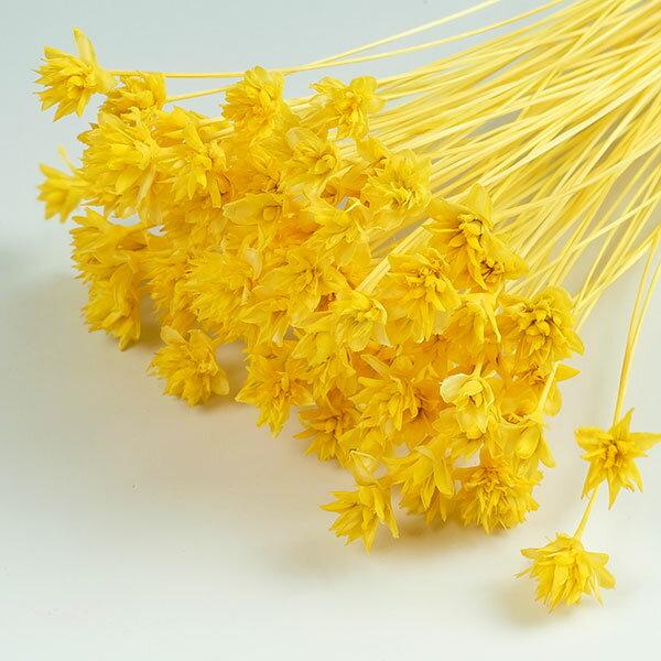 ミニコーンフラワー イエロー <ドライフラワー・フラワーアレンジメント・花材・花資材>