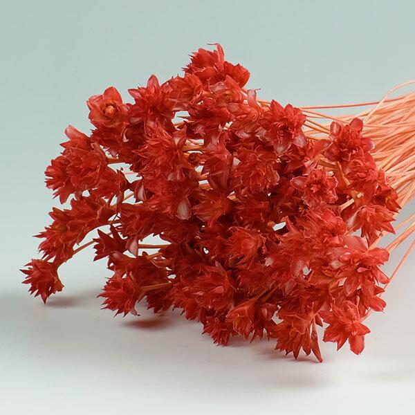 ミニコーンフラワー フランボワーズ <ドライフラワー・フラワーアレンジメント・花材・花資材>