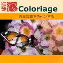 【ポイント10倍】【35分でお届け】AKVIS Coloriage Home 12.5 プラグイン【shareEDGEプロジェクト】【ダウンロード版】