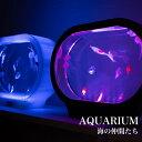 アクアリウム ミニアクアリウム 水族館 水槽 海 LED クマノミ クラゲ クリオネ インテリア 癒しグッズ リラクゼーション ギフト プレゼ…