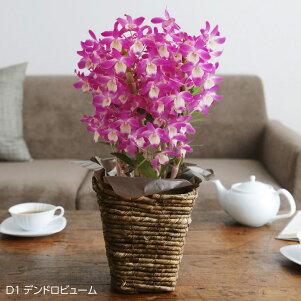 2018母の日のお花Merciメルシー【送料無料】