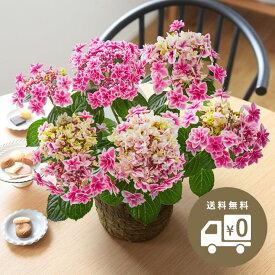 2021 母の日のお花 Kiitos キートス ギフト アレンジメント 花束 鉢植え【送料無料】