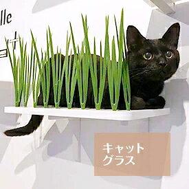 キャットグラス キャットタワー 日本製 猫タワー タワー キャットウォーク キャットステップ 猫 ねこ 多頭飼い 省スペース おしゃれ スリム 単品 DIY 壁 棚 クリア