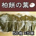 【柏の葉50枚×5束】 柏の葉 50枚 柏餅の葉っぱ 柏餅