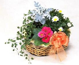 冬のお花の寄せ鉢バスケット入り クリスマス お歳暮 お正月