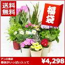 【福袋】春の鉢植えの福袋【送料無料】