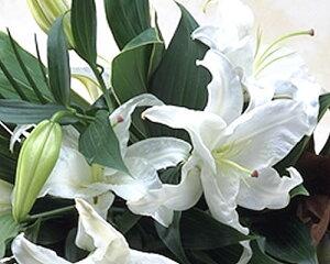 タイムセール豪華なカサブランカの花束♪ ユリの王様 白 百合 カサブランカが3本入り ギフト バレンタインデー 誕生日 お供え