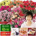 【壱の市期間中ポイント5倍】【早割 母の日 花とセット ギフト プレゼント】【楽天一位】色が選べるカーネーションの鉢植えと選べるお…