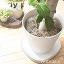 《全3色》tidy プランタブルL 植木鉢トレー Plantable L 【ティディ 観葉植物 デザイン雑貨 玄関 ガーデニング バルコ…