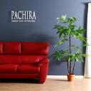 【送料込】 観葉植物 フェイク PACHIRA パキラ スタンダード 172cm 大型 造花 インテリア 植物 フェイクグリーン 人工…