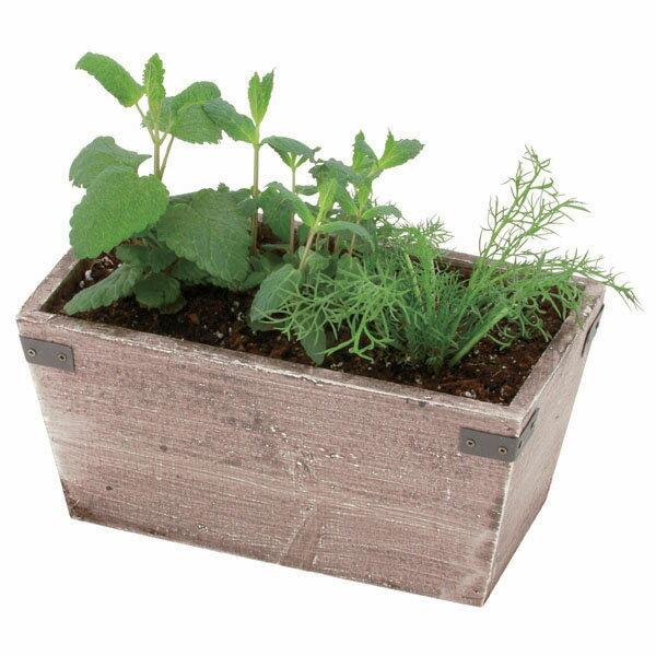 送料込|Green&Herbs<ハーブ寄せ植え(ティー系)>【送料込/本体3780円+送料540円】|※メッセージカード無料対応