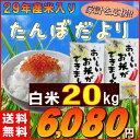 米 20kg お米 白米 安い (10kg×2袋) 訳あり ブレンド米 国内産 送料無料 『たんぼだより(白米10kg×2)』29年産新米入…