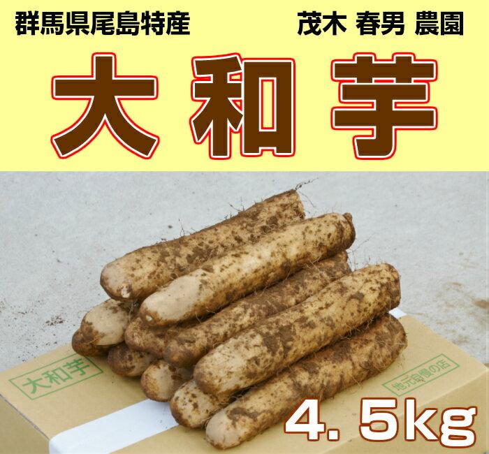 群馬県尾島特産 大和芋 贈答品(A棒) 4.5kg やまといも とろろ芋