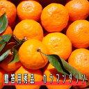 【送料込】贈答用 カラマンダリン5キロ【4月末頃より収穫予定】【送料無料】【お買い得】【ギフト】【オレンジ】【みかん】【贈り物】