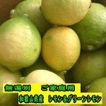 安心安全の国産レモン