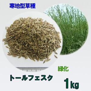 種子 トールフェスク 1kg