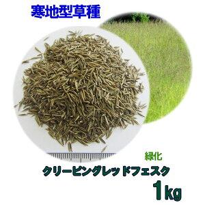 種子 クリーピングレッドフェスク 1kg