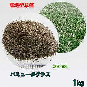 種子 バミューダグラス 1kg