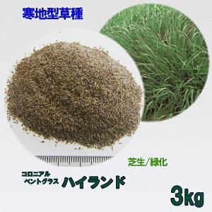 種子 コロニアルベントグラス ハイランド 3kg