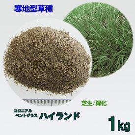 種子 コロニアルベントグラス ハイランド 1kg