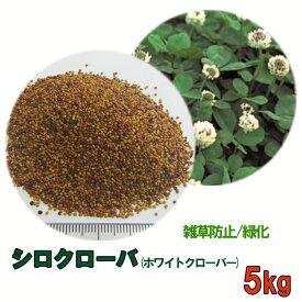 種子 シロクローバ 5kg 送料無料