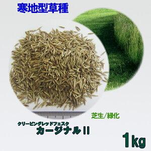 種子 クリーピングレッドフェスク カージナルII 1kg