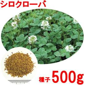 種子 シロクローバ 500g