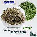 種子 トールフェスク ダイナマイトLS 1kg