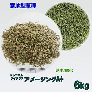 種子 ペレニアルライグラス アメージングA+ 6kg