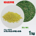 コート種子 バミューダグラス トランスコンチネンタル 1kg