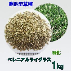 種子 ペレニアルライグラス 1kg