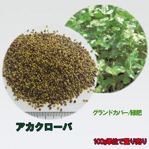 種子 アカクローバ 100g