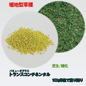 コート種子 バミューダグラス トランスコンチネンタル 100g