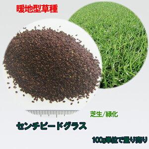 種子 センチピードグラス 100g