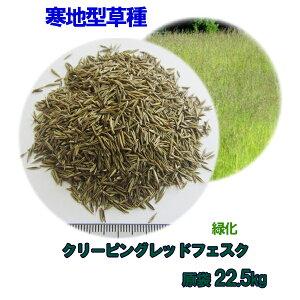種子 クリーピングレッドフェスク 22.5kg