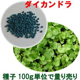 種子 ダイカンドラ コート 100g