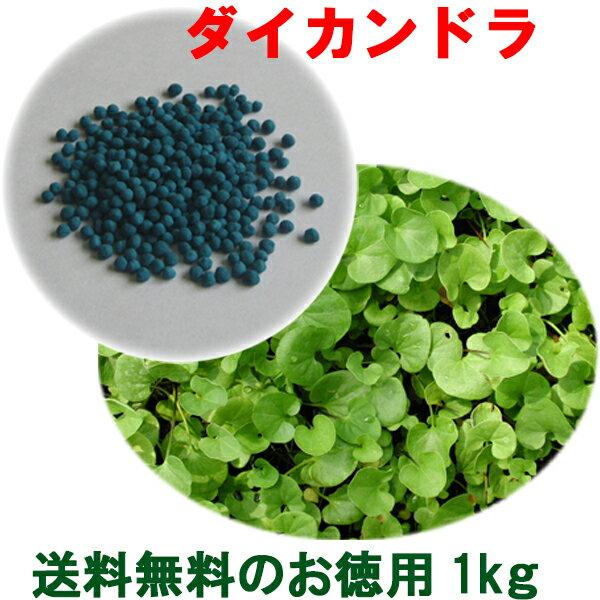 種子 ダイカンドラ コート1kg 60〜100平米分