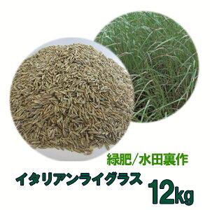 種子 イタリアンライグラス 12kg