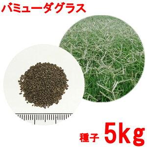 種子 バミューダグラス 5kg