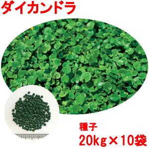 種子 ダイカンドラ コート 20kg×10袋