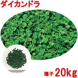 種子 ダイカンドラ コート 20kg