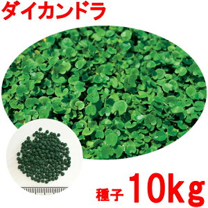 種子 ダイカンドラ コート 10kg