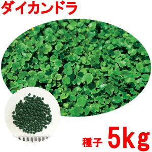 種子 ダイカンドラ コート 5kg